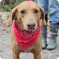 Adopt A Pet :: Snooks - Oakland, AR