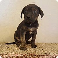 Adopt A Pet :: Atticus (SEE VIDEO) - Trenton, NJ
