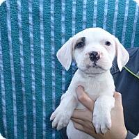 Adopt A Pet :: Garrett - Oviedo, FL