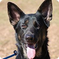Adopt A Pet :: Dixie - Preston, CT