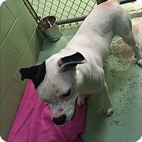 Adopt A Pet :: Hugo - Gadsden, AL