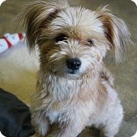 Adopt A Pet :: 'THUMBELINA' - Agoura Hills, CA
