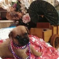 Adopt A Pet :: Baby B - springtown, TX