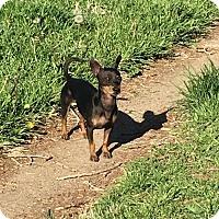 Adopt A Pet :: Jordan  1 Year - C/S & Denver Metro, CO