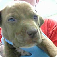 Adopt A Pet :: A272918 - Conroe, TX