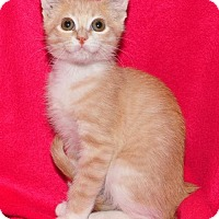 Adopt A Pet :: Lovebug - Garland, TX