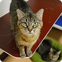 Adopt A Pet :: Grace - Springfield, IL