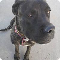 """Adopt A Pet :: Dory """"Zana"""" - El Paso, TX"""