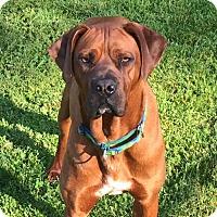 Adopt A Pet :: Lavina (very sweet) - Chambersburg, PA