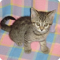 Adopt A Pet :: Shana - Woodstock, ON