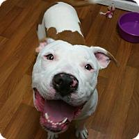 Adopt A Pet :: Gunner - Lisbon, OH