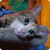Adopt A Pet :: Speckles - Boise, ID
