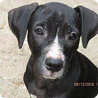 Adopt A Pet :: Frazzel - Houston, TX