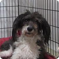 Adopt A Pet :: BONNIE - Jackson, MO