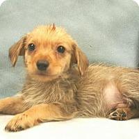 Adopt A Pet :: Cooper - Modesto, CA