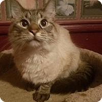 Adopt A Pet :: Kingsley - Ennis, TX