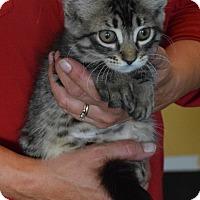 Adopt A Pet :: Aiken - Surrey, BC