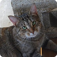 Adopt A Pet :: Cat Benatar - Brownsboro, AL