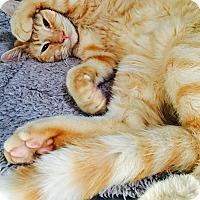 Adopt A Pet :: Sebastian - Oakdale, CA