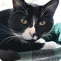 Adopt A Pet :: Addie - Georgetown, TX