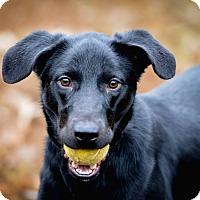 Adopt A Pet :: Gwen Stefani - Jackson, TN