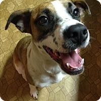 Adopt A Pet :: Diamond - Morganton, NC