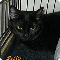 Adopt A Pet :: Betty - Chisholm, MN