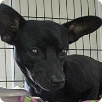 Adopt A Pet :: Oscar - Clear Lake, IA
