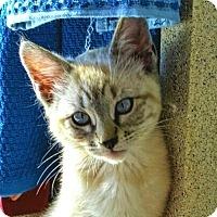 Adopt A Pet :: Jack Tripper - San Jose, CA