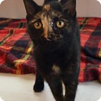 Adopt A Pet :: Sunshine - Houston, TX