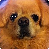 Adopt A Pet :: Sal - Portland, ME