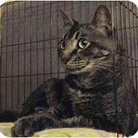 Adopt A Pet :: Chaucer - Davis, CA