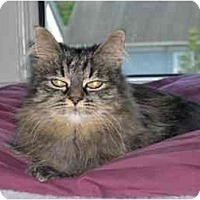 Adopt A Pet :: Amanda (Little Princess!) - Portland, OR