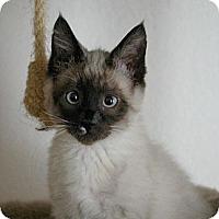 Adopt A Pet :: Reno - Sacramento, CA