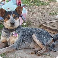 Adopt A Pet :: Dorothy Barker - Phoenix, AZ