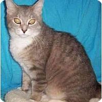 Adopt A Pet :: Aspen - Reston, VA