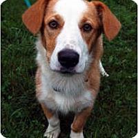 Adopt A Pet :: Rosie - Murfreesboro, TN