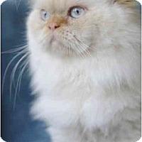 Adopt A Pet :: Cody - Columbus, OH