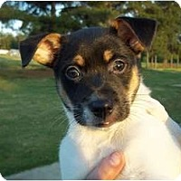 Adopt A Pet :: Brad - Adamsville, TN