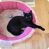 Adopt A Pet :: Sabrina - Toms River, NJ
