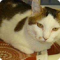 Adopt A Pet :: Jax - Hamburg, NY