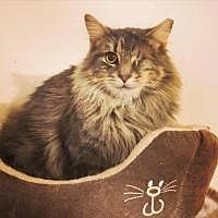 Adopt A Pet :: Leela - Cleveland, OH