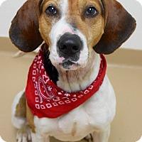 Adopt A Pet :: Cash - Dublin, CA