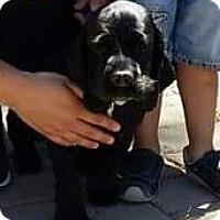 Adopt A Pet :: Marley - Rancho Cucamonga, CA