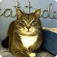 Adopt A Pet :: Thunder - Medway, MA