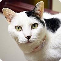 Adopt A Pet :: Darwin - Springfield, IL