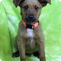 Adopt A Pet :: ATLEY - Westminster, CO