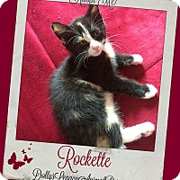 Adopt A Pet :: ROCKETTE - Lincoln, NE