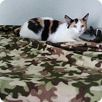 Adopt A Pet :: Jasmine - China, MI