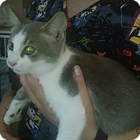 Adopt A Pet :: SAFFRON - Gloucester, VA